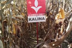 kalina (3)
